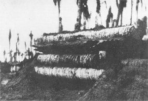 Photograph of Japanese coconut log pillbox