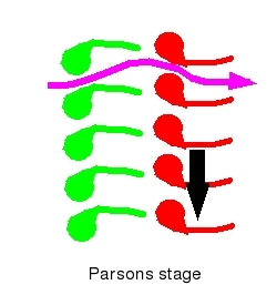 Diagram of Parsons         stage