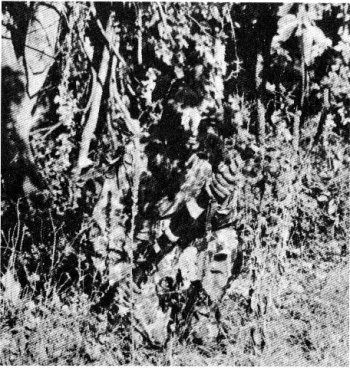 Photograph of camoflaged sniper